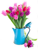 Bouquet of  red and purple  tulip flowers Stock Image