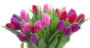 Bouquet of  red and purple  tulip flowers. Bunch  of fresh  red, pink  and purple tulip flowers close up  isolated on white background Royalty Free Stock Photos