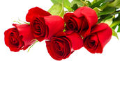 Bouquet of red rose flower on white Royalty Free Stock Image