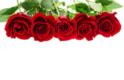 Bouquet of red rose flowers on white Stock Photo