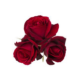 Bouquet of Red Rose Stock Photo