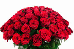 Bouquet of 101 red rose isolated on white. Isolated large bouquet of 101 red rose isolated on white Royalty Free Stock Images