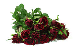 Bouquet of red roses. On a white background stock photography