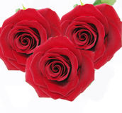 Bouquet of red roses. Bouquet of damask red roses isolated on white background royalty free stock photos