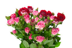 Bouquet of red roses Royalty Free Stock Photography