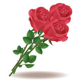 Bouquet of red roses. On white background Royalty Free Stock Image
