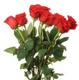 Bouquet of red roses. It is isolated on a white background Stock Image