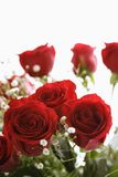 Bouquet of red roses. Stock Image