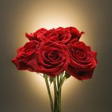 Bouquet of red roses. Stock Photo