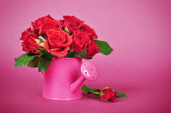 Bouquet of red roses. In a pink watering can on a pink background Stock Image