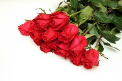 Bouquet of red roses royalty free stock images