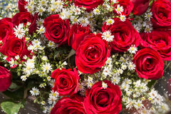 Bouquet of red roses with baby's breath flowers close up Stock Image