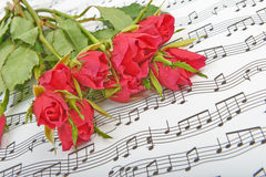 Bouquet of red roses on a background Royalty Free Stock Photo
