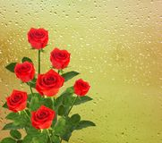 Bouquet of red roses on the background Stock Photo