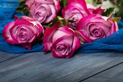 Bouquet of red roses. On a blue wooden background royalty free stock photography