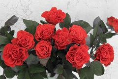 A bouquet of red roses. Red roses close up royalty free stock images