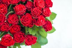 Bouquet of red roses. Close up royalty free stock photography