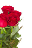 Bouquet of red roses with copy-space. For your text on white background Stock Photography