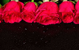 Bouquet of red roses with dew drops Stock Images