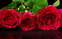 Bouquet of red roses Stock Photos