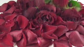 Bouquet of red roses with drops of water falling to background of the petals reverse slow motion stock footage video stock footage
