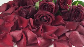 Bouquet of red roses with drops of water falling to background of the petals slow motion stock footage video stock video