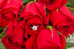 Bouquet of Red Roses With Engagement Ring Stock Images