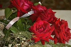 Red roses with eucalyptus sprigs, seashells, satin ribbon Royalty Free Stock Images