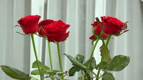 Bouquet of red roses. Bouquet of five red roses stock footage