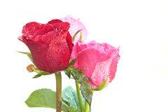 Bouquet of red roses flower isolated white. File of bouquet of red roses flower isolated white Stock Photos
