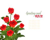 Bouquet of red roses with green leaves Stock Image
