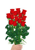 Bouquet  of red roses in hand closeup isolated on white Stock Images