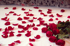 Bouquet from red roses and his scattered petals on a bed. With white sheet and two pillows Royalty Free Stock Photography