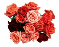 Bouquet of red roses isolated Royalty Free Stock Image
