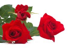 A bouquet of red roses isolated on white. Background Stock Photo