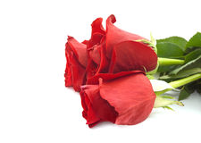 Bouquet of red roses isolated on white background. Stock Photo