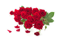 Bouquet of red roses Stock Photography