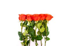 A bouquet of red roses. Long stems with leaves and buds. Roses on a white background. Template for design stock photo
