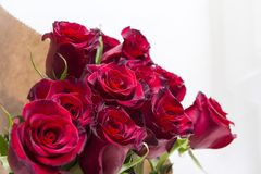 Bouquet of red roses, many flowers. On a light background royalty free stock photo