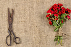 Bouquet of Red Roses and Old Rusty Scissors on on rustic jute background Stock Photos