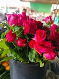 A bouquet of red roses in the plastic pot. Stock Image