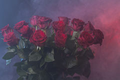 Bouquet of red roses on red and blue smoky backgroud Royalty Free Stock Photos