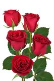 Bouquet of red roses isolated. Bouquet of red roses on a white background. Isolated royalty free stock photography