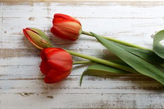 Bouquet of red spring tulips on white rustic wooden background Royalty Free Stock Photography