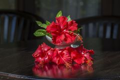 Bouquet of red tropical flowers in white ceramic vase stands in wooden table. Bali, Indonesia. Close up Royalty Free Stock Image