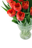 Bouquet of red tulip Royalty Free Stock Image