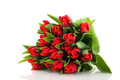 Bouquet red tulips Stock Photography