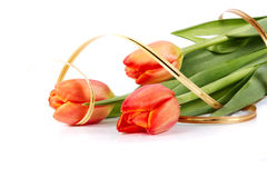 Bouquet of red tulips. The bouquet of red tulips with a gold ribbon lies on a white background Stock Image