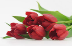 Bouquet of red tulips. Beautiful fresh bouquet red tulips isolated color image Stock Photography
