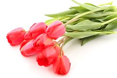 Bouquet of red tulips stock images